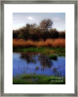 Reflections Framed Print by Molly McPherson