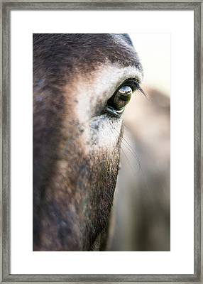 Reflections Of Beauty Framed Print by Shelby  Young