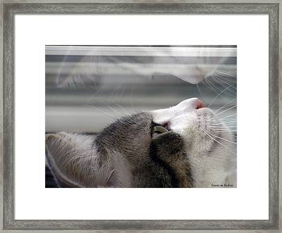 Reflections Of Jackson.horz Framed Print by Lorrie Bedore