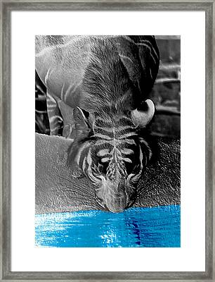 Reflections Of The Wild Negative Framed Print by DigiArt Diaries by Vicky B Fuller