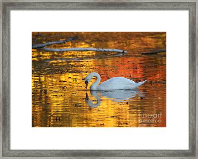 Reflections On Golden Pond Framed Print by Jayne Carney