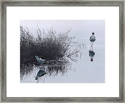 Reflections Framed Print by Peter Mathios