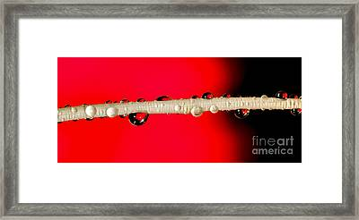Refractions Of A Red Rose Framed Print by Kaye Menner