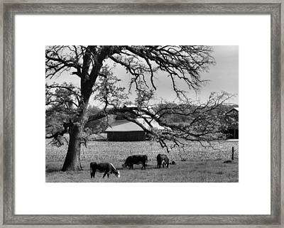 Refreshing Framed Print by Tom Druin