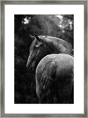 Regal Framed Print by Pamela Hagedoorn