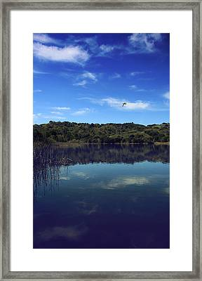 Regardless Of The Blues Framed Print by Laurie Search