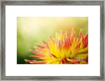 Rejoice Framed Print by Beve Brown-Clark Photography