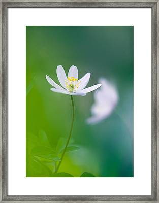 Rejuvenation Framed Print by Sarah-fiona  Helme