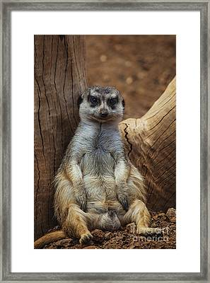 Relaxing And Smileing Framed Print by Fabian Roessler