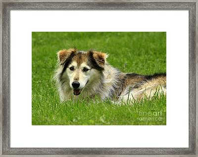 Relaxing On A Spring Day Framed Print by Inspired Nature Photography Fine Art Photography