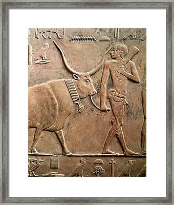 Relief Depicting A Peasant Leading A Cow To Sacrifice, From The Mastab Of Ptah-hotep Framed Print by Egyptian 5th Dynasty