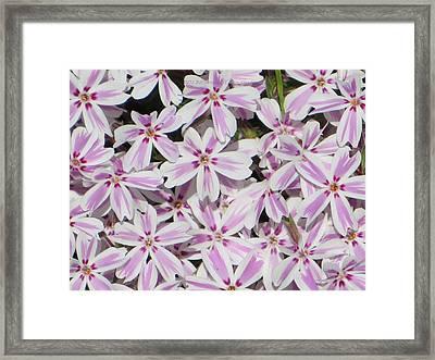 Remarkable Florals Framed Print by Sonali Gangane