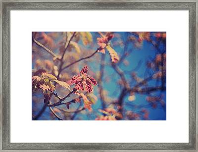 Renewal Framed Print by Laurie Search