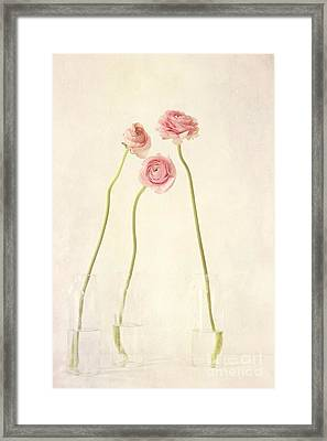 Renoncules Framed Print by Priska Wettstein