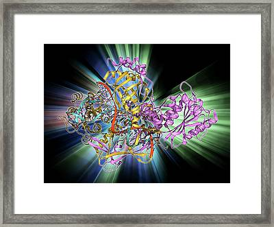 Repair Protein And Dna Framed Print by Laguna Design