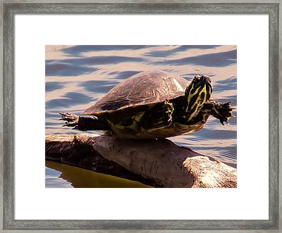 Repeat After Me Framed Print by Zina Stromberg