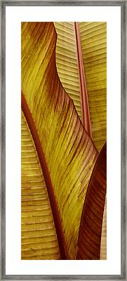Repose - Leaf Framed Print by Ben and Raisa Gertsberg