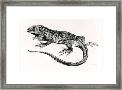 Reptile Framed Print by English School