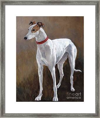 Rescued Racer Framed Print by Charlotte Yealey