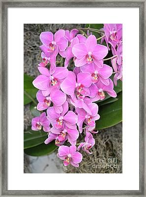 Resplendent Orchid Framed Print by Sonali Gangane