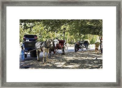Rest Stop - Central Park Framed Print by Madeline Ellis