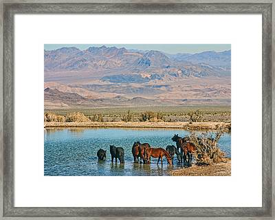 Rest Stop Framed Print by Tammy Espino
