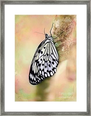 Restful Butterfly Framed Print by Sabrina L Ryan