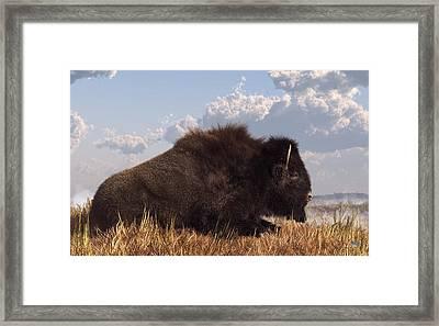 Resting Bison Framed Print by Daniel Eskridge