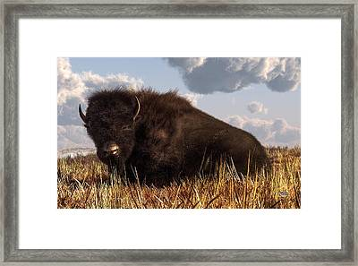 Resting Buffalo Framed Print by Daniel Eskridge