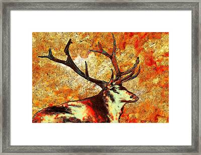Resting Elk Framed Print by Jack Zulli