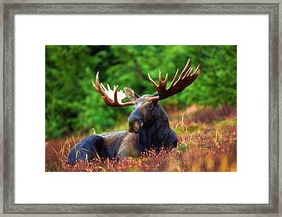 Resting In Peace Framed Print by Ayse Deniz