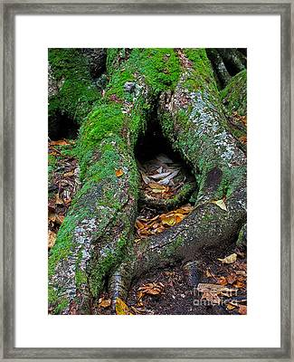 Resting Framed Print by Juergen Roth