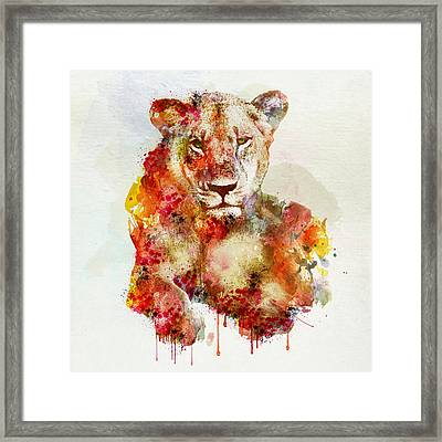 Resting Lioness In Watercolor Framed Print by Marian Voicu