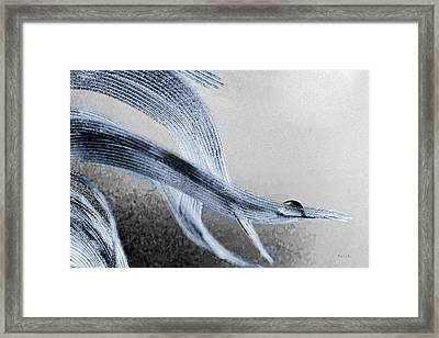 Resting On A Feather Framed Print by Bob Orsillo