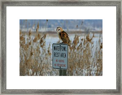 Resting Owl Framed Print by Marty Fancy
