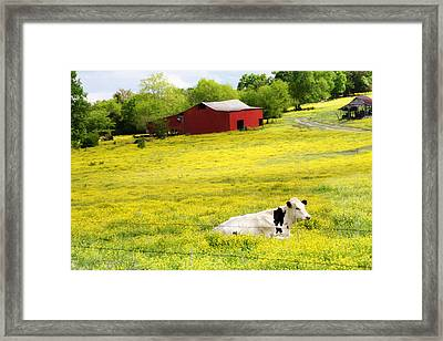 Resting Place Framed Print by Amy Tyler