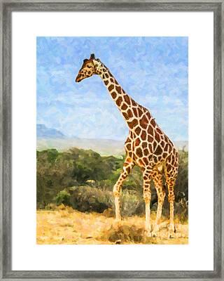 Reticulated Giraffe Kenya Framed Print by Liz Leyden