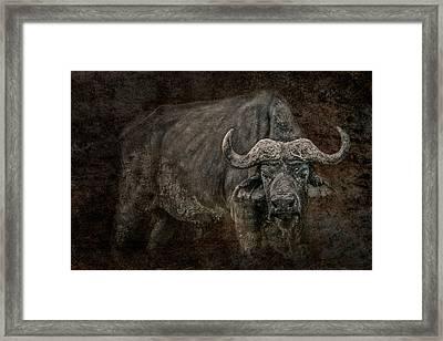 Retired General Framed Print by Mike Gaudaur