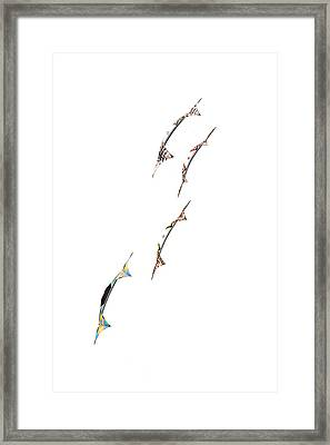 Rev Kites On White 1 Framed Print by Rob Huntley