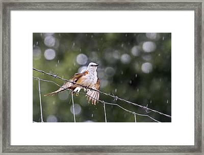 Revelling In The Rain Framed Print by Annette Hugen