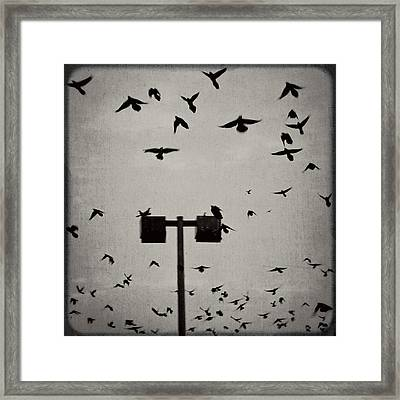 Revenge Of The Birds Framed Print by Trish Mistric