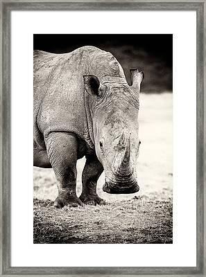 Rhino After The Rain Framed Print by Mike Gaudaur