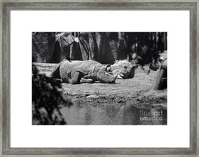 Rhino Nap Time Framed Print by Thomas Woolworth
