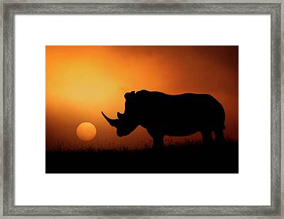 Rhino Sunrise Framed Print by Mario Moreno