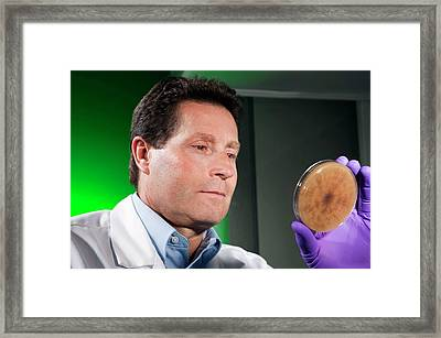 Rhizoctonia Plant Fungus Research Framed Print by Peggy Greb/us Department Of Agriculture