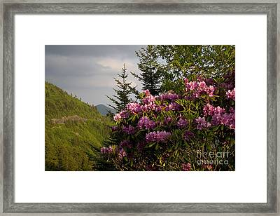 Rhododendron 1 Framed Print by Jonathan Welch
