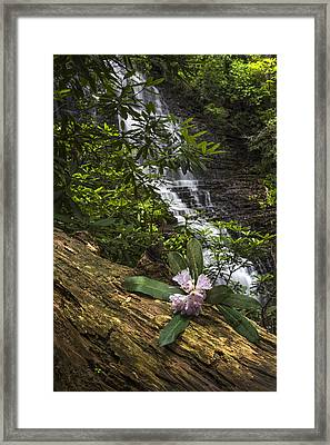 Rhododendron At The Falls Framed Print by Debra and Dave Vanderlaan