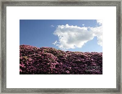 Rhododendron Framed Print by Melissa Petrey