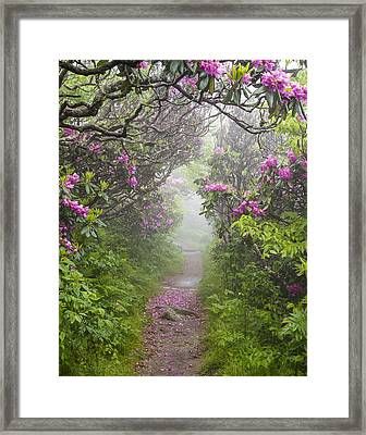 Rhododendron Time In North Carolina Framed Print by Bill Swindaman