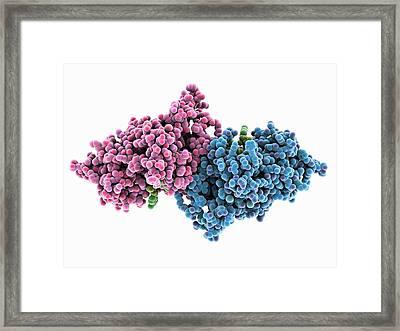 Ribonuclease Bound To Rna Framed Print by Laguna Design